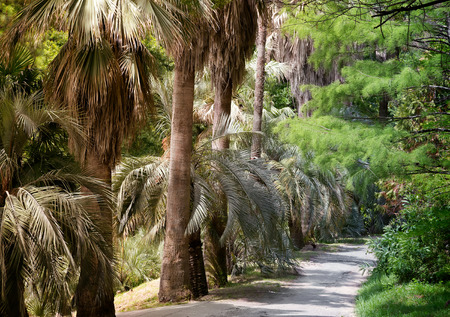 subtropical: Part of the arboretum with many beautiful tropical plants along the tracks. Palm alley.
