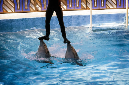 Two dolphins at the Dolphinarium during the presentation during the support of the coach above the water.