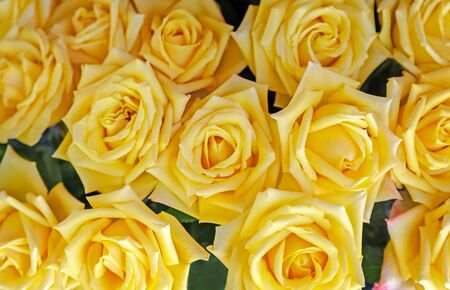 A large bouquet of beautiful roses, close-up, top view. Stock Photo