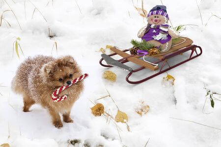 A Christmas story: the snowman on the sled and the cute dog on snow . 3 D visualization.