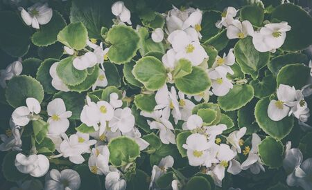 정원에있는 화단에 피는 녹색 나뭇잎 가운데 작은 크기의 섬세한 흰색 꽃.