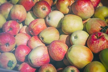 Grandes pommes mûres, photographiées de près. Banque d'images - 89171328