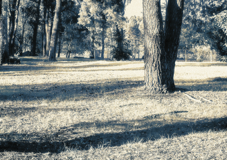 Landscape: Sunny meadow in the forest in early autumn. The effect of infrared film.