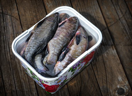 Purified fresh water fish in the container.