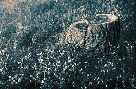 Stump of an old tree among the grass and wildflowers.