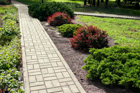Path in the Park with beautiful ornamental shrubs