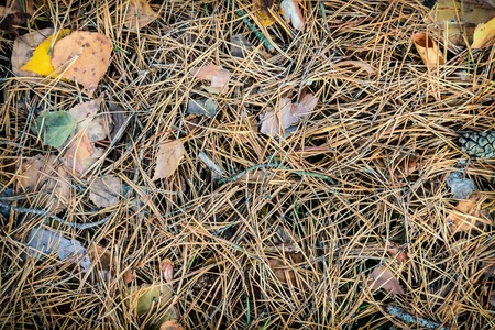 Background image: coniferous needles and yellow autumn leaves lie on the ground.