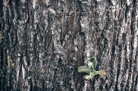 Part of the tree trunk, covered with bark with leaves sprouting through it. Background image, close-up. Stock Photo
