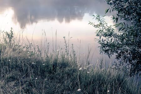 On the banks of the river on the background of water meadow grasses and flowers grow.