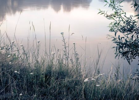 Meadow grass and flowers on the river Bank. Zdjęcie Seryjne - 130146598