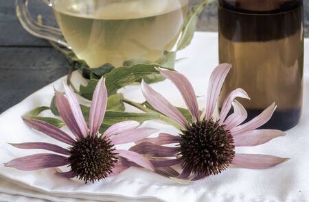 Medicinal herbal tea with the medicinal plant Echinacea, which has an immunostimulating effect.