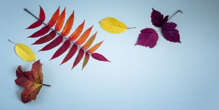 Bright autumn leaves on a blue background.