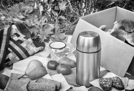 In the woods in a clearing on the tablecloth lies Breakfast: sausage, bread, coffee, fruit. Next in the box of harvested mushrooms. Black and white image 写真素材