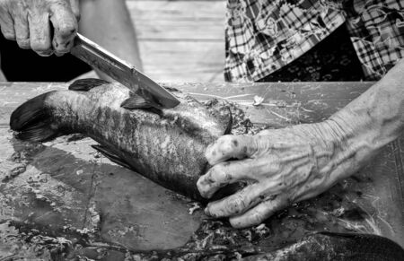 On the table, an elderly woman with a kitchen knife cleans and eviscerates fish caught in the river. Presented in close-up, black and white image Foto de archivo - 134655264