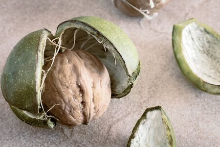 Walnut fruit on the table. Raw walnuts in cracked green shells close-up. Banco de Imagens