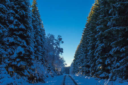 traveled: The first snow in the forest in the Eifel