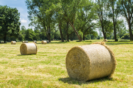 throughout: Bales of straw are scattered throughout the field Stock Photo