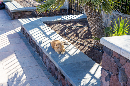 free-running cat lives on the street