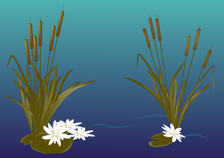 water lilies: White water lilies, reeds ,water, fog, night Illustration