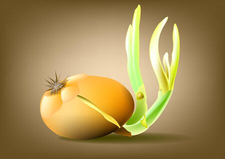 husk: Onions to a golden husk with green sprouts Illustration