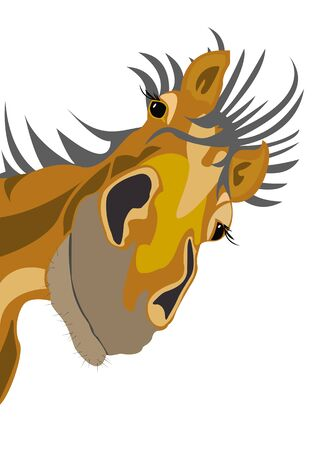 old horse: Old horse. Horse head in cartoon style