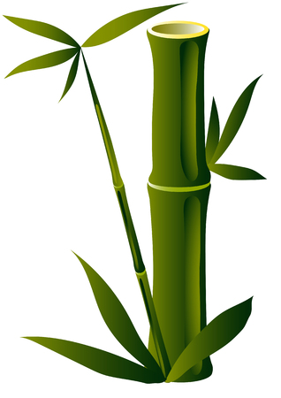 shoots: bamboo shoots on the trunk of an old cut, on a white background