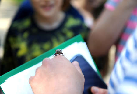 Beetle Chafer melolontha on a mans hand Stock Photo