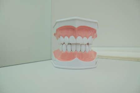 Dentoform, Dental teeth model in medical cabinet