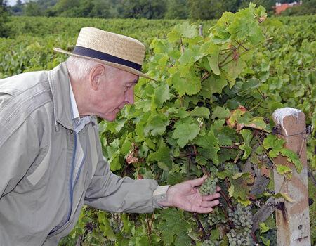 winemaker: Winemaker in the vineyard