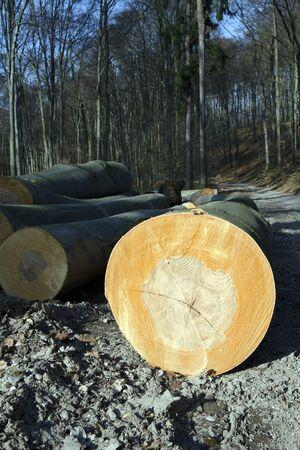 beechwood: The mining beechwood in Little Carpathians Mountain, Slovakia.