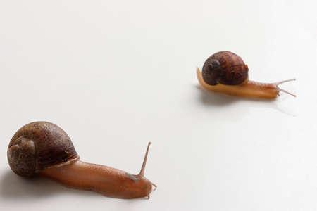 lesma: Slug Race