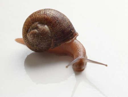 slug: Slug Stock Photo