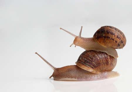 slug: Piggy Back Slug style