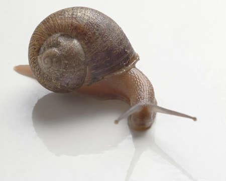 slug: slug - escargot anyone Stock Photo