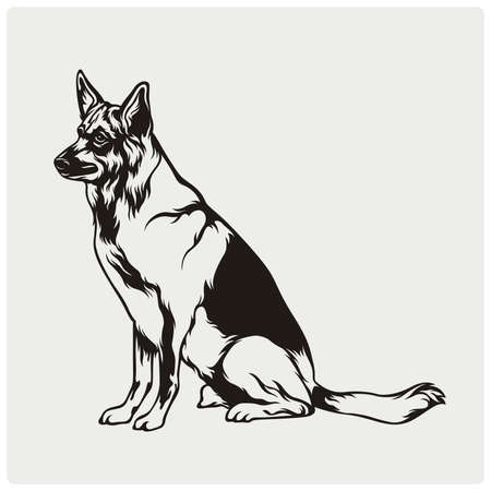 super dog: Vector illustration of an dog