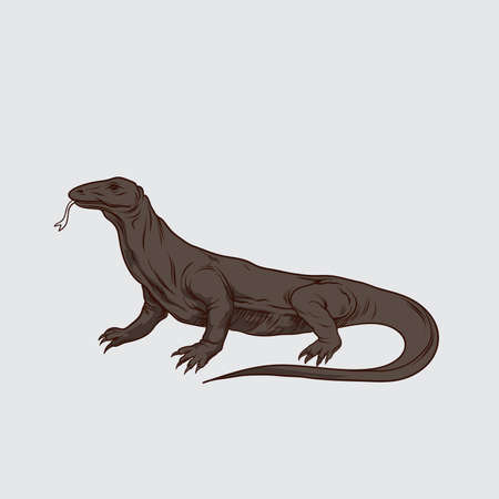 Komodo dragon. Vector illustration.