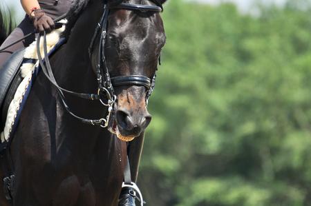 Portrait of sport horse in training