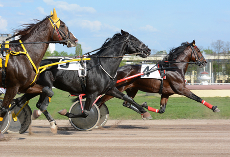 Harness horse racing. Three horse trotter breed on the move on hippodrome 版權商用圖片 - 95720253