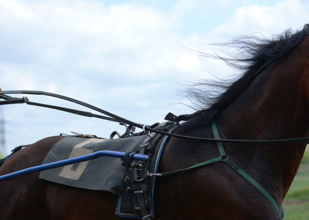 Harness horse racing in details. Part of horse trotter breed