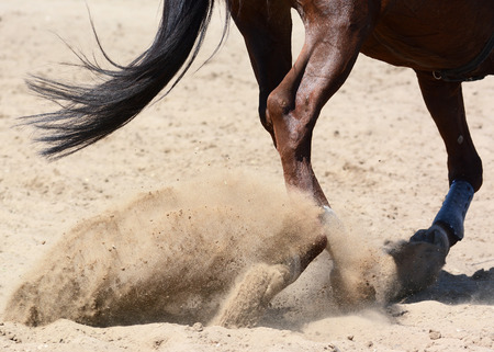 Legs of a sports horse on a gallop in sand. Equestrian sport in details