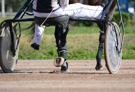 Harness horse racing in details. Legs of a trotter horse and horse harness. Standard-Bild