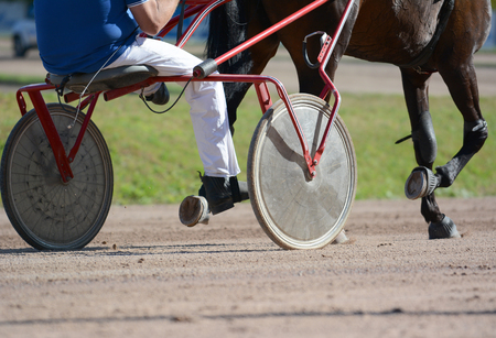 Harness horse racing in details. Legs of a trotter horse and horse harness. Stockfoto