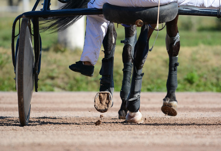 Legs of a trotter horse and horse harness. Harness horse racing in details. Imagens