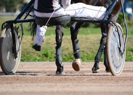 Harness horse racing. Horses trotter breed in motion on hippodrome. 版權商用圖片
