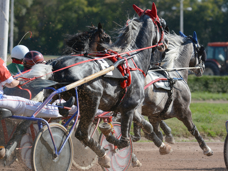 Horses trotter breed in harness horse racing on racecourse.