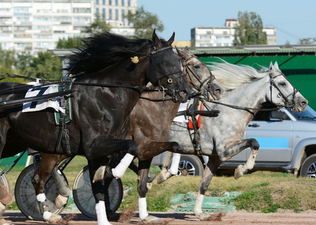 Harness horse racing. Horses trotter breed in motion on hippodrome.