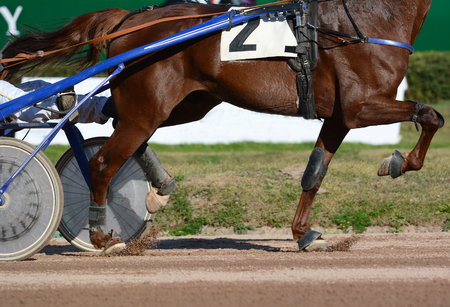Harness horse racing. The red horses trotter breed in motion on hippodrome.