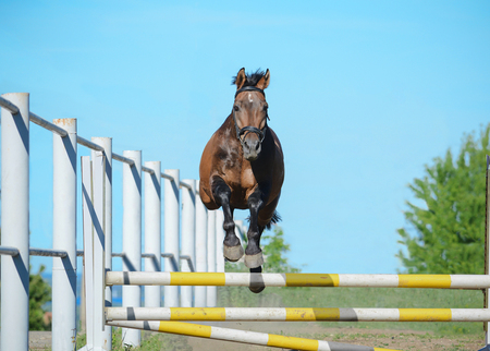 The brown sporty horse jumps jump over the hurdle on the sky background. Front view Stock Photo