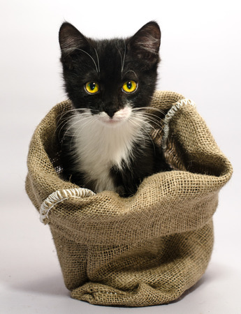 A black and white cat with yellow eyes thrust its muzzle out of a sackcloth bag