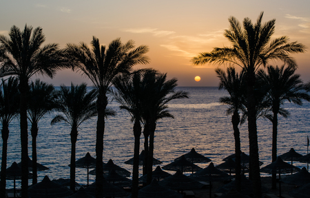 dawn over a tropical beach, silhouettes of palms and wicker cano Stock Photo